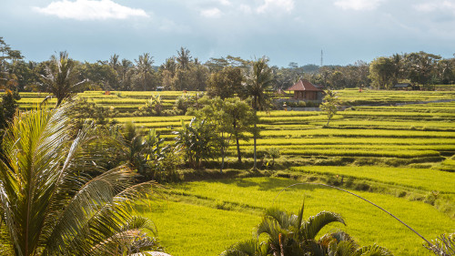 View from the Karsa Kafe in Ubud, Bali, Indonesia
