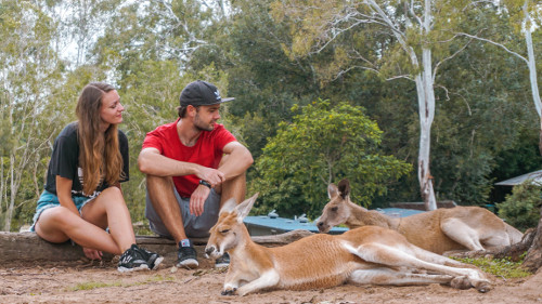 Chilling with the kangaroos at the Lone Pine Koala Sanctuary in Brisbane, Australia
