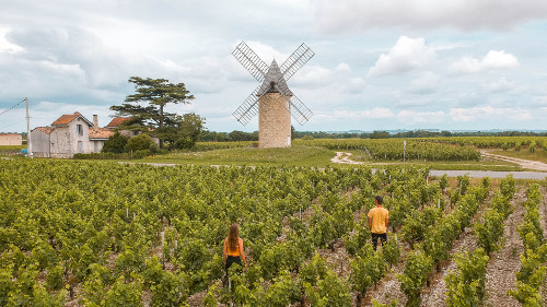 Windmill and vineyards in Lamarque, France