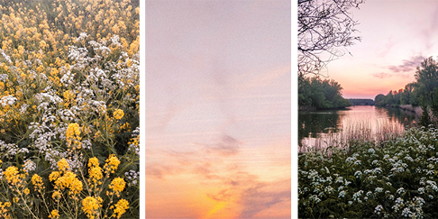 Spring Photo Guide