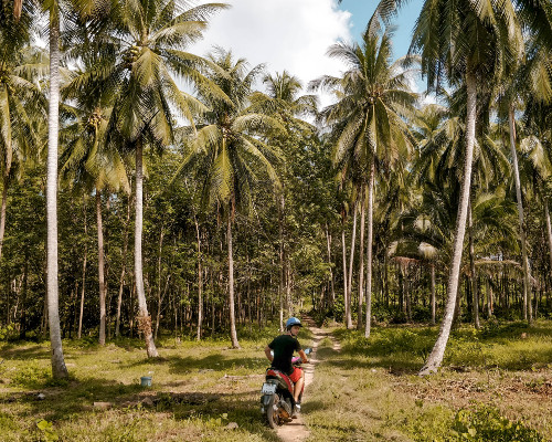 Driving the scooter through a palm tree forest in Koh Yao Yai, Thailand