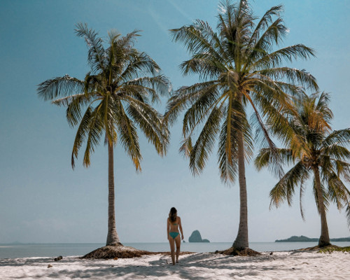 Palm trees at the beach in Koh Yao Yai, Thailand