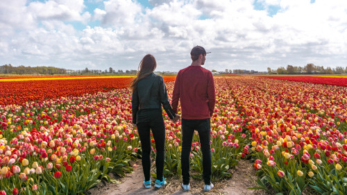 Tulip field in Noordwijkerhout, the Netherlands